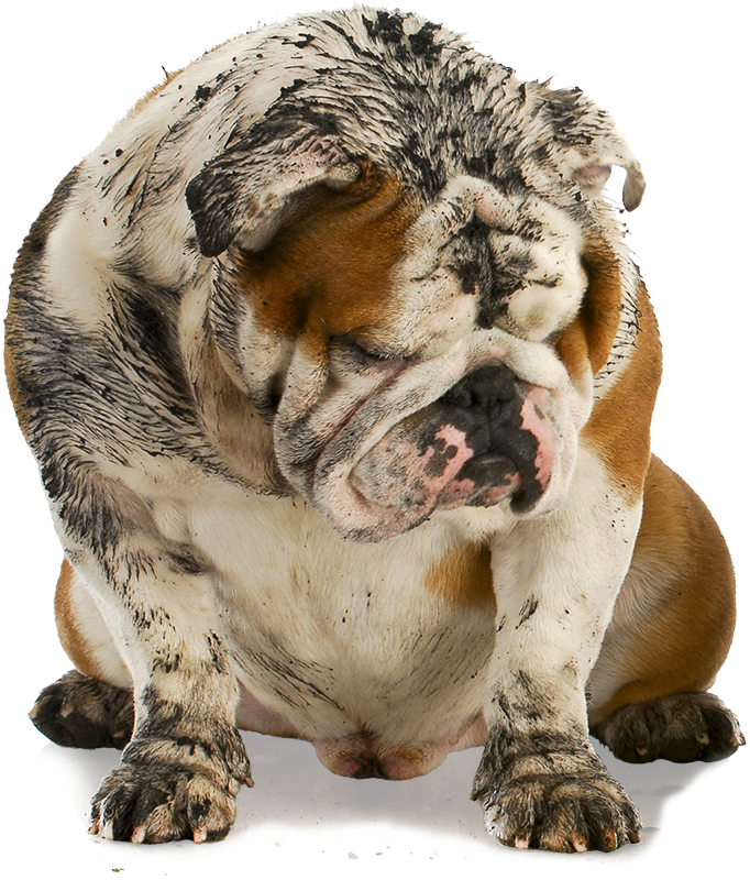 Dirty dawg mobile grooming where the groomer comes to you dirty dawg is a mobile pet grooming service in the maple grove minnesota area we offer complete dog grooming services in a self contained solutioingenieria Images